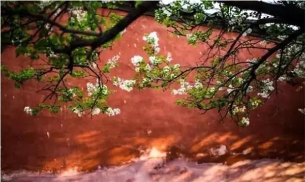 五台山春天的桃花,格外地令人赏心悦目!