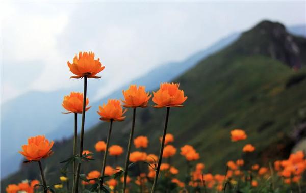 在花开芬芳的日子里,与五台山来一次邂逅