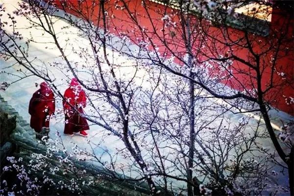 五台山那山那寺那花——清凉菩提邀您感受仙境