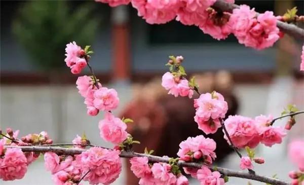 五台山的春天 等你入画