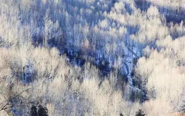 当务之急丨来五台山邂逅一场冬日盛宴!
