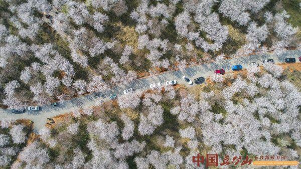 山西十大春日花季主题打卡地出炉 62个赏花地覆盖全省11市